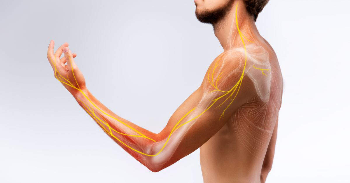 Nervii articulațiilor dureri musculare